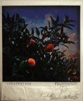 Orange Tree by sorrowtherapy