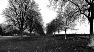 tree lined by awjay