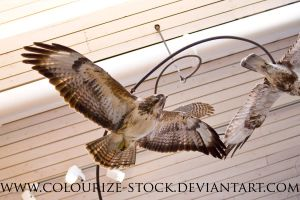 Bird Stock 19 by Colourize-Stock