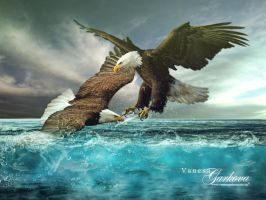 Eagle fight by vanesagarkova