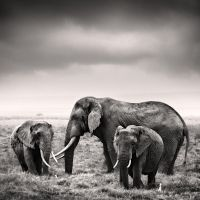 Tsavo East III by Jez92