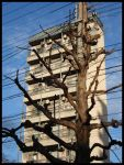 Building, tree, wires, Japan by RustyGonzo