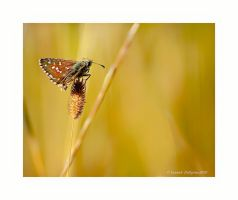 butterfly 1 by YannickDellapina