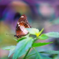 Butterfly by FlabnBone