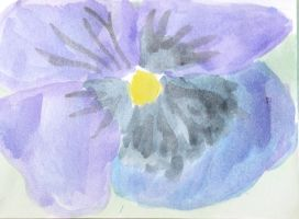 Pansy  by opium-luvs-blue