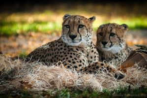 Just Resting... by amrodel