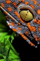 Tokay Gecko by Illustrate-The-World