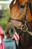 Racehorse Stock 139 by Vance-Equine-Stock