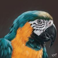 Parrot: painting practise by MzJekyl