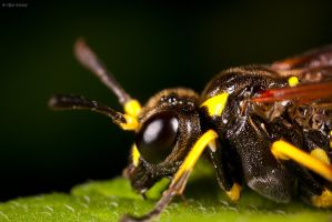 Wasp profile by Rapierr