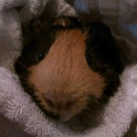 Snickers after bath by SNlCKERS
