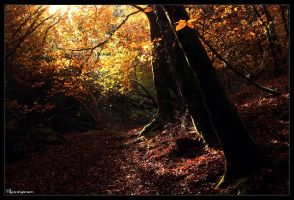 A bit of Fantasy by FlorentCourty