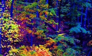 Fall woods at dusk by clippercarrillo