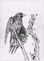Raven and worms - A3 pencil by IgorChakal