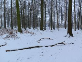 snow 72 by tegalus