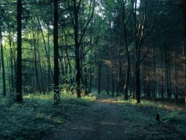 Forest path 3 by FrantisekSpurny