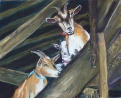 Goats by Wulff-Arts