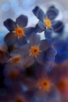 Forget Me NOT by ninazdesign