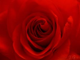 Roses Are Red by Lylly55