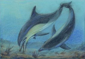 Black Sea Common Dolphins by Liris-san