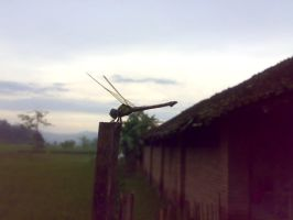 dragon fly in village by IRXDESIGN