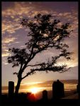 sunset tree by tomegatherion
