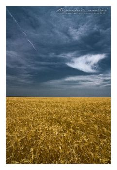 A dream in a wheat field Pano2 by vxside