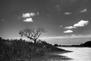 Marshland Tree by Bawwomick