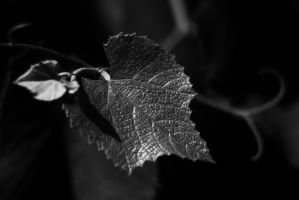 Textured Leaf by RobertRobledo