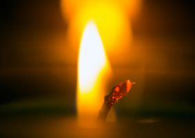 Candle - Macro by insomniac199