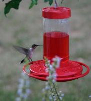 Hummingbird-3 by bluesman219