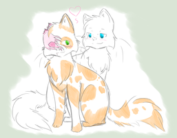 Warriors: Brightheart x Cloudtail by XxAMVxX