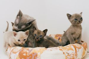 kittens 1 by seafoodmwg