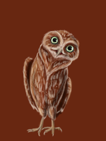 Fips the pygmy owl by malloth86