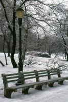 4390 Frozen Bench and Trees by PhilS1761