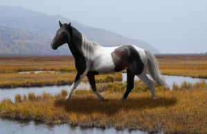 Wild Mustang by theDeliriousOwl