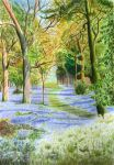 Bluebell Woods - Copics and Watercolour Pencils by 6re9