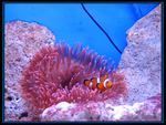 Finding Nemo by blue-eyed-heddy