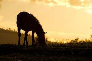 Evening on the pasture by Wolfling01