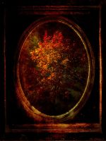 autumn tree mirrored by JacqChristiaan