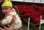 Baby at the Flower Fields by DarkwingFrog