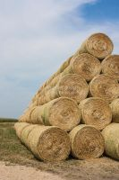 Golden straw bales. by Evefidor