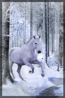 Ride away from the winter by NkDesignTGA