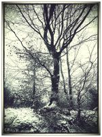 Winter Tree by Weissglut