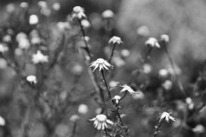 little flowers. by this-is-the-life2905