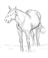 Horse Sketch by JEAikman