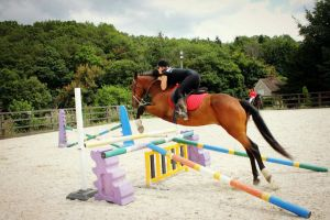 Show Jumping Trotter by StarCrossedPsycho