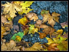 Leaves in autumn by kanes