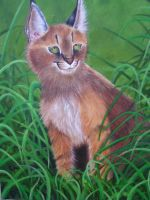 Caracal by KittyNamedAlly