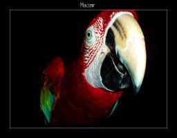Macaw by wanchenghuat